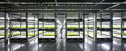 野菜工場が未来的でカッコイイ