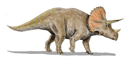 レガリケラトプス