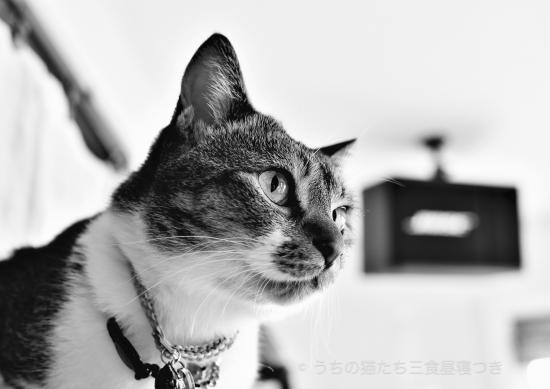 颯 (2)
