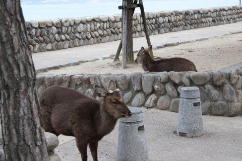 itsukushima-02.jpg