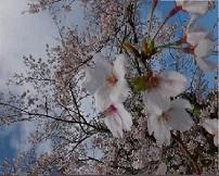 吉田拓郎「春を待つ手紙」にのせて