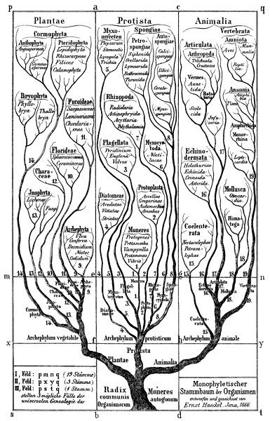 ヘッケルの系統樹