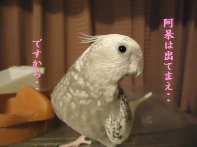 動画 440