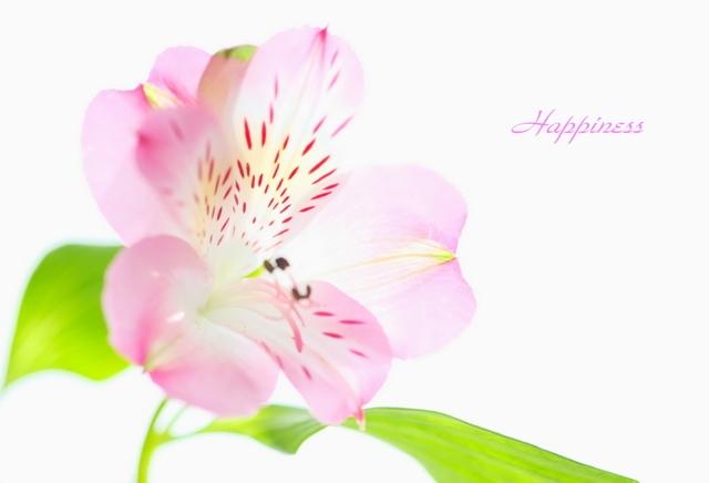 花・Happiness