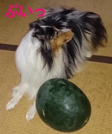 DSC_0264.jpg