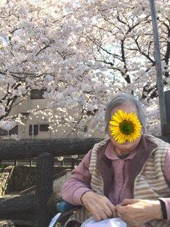 ばあばと桜