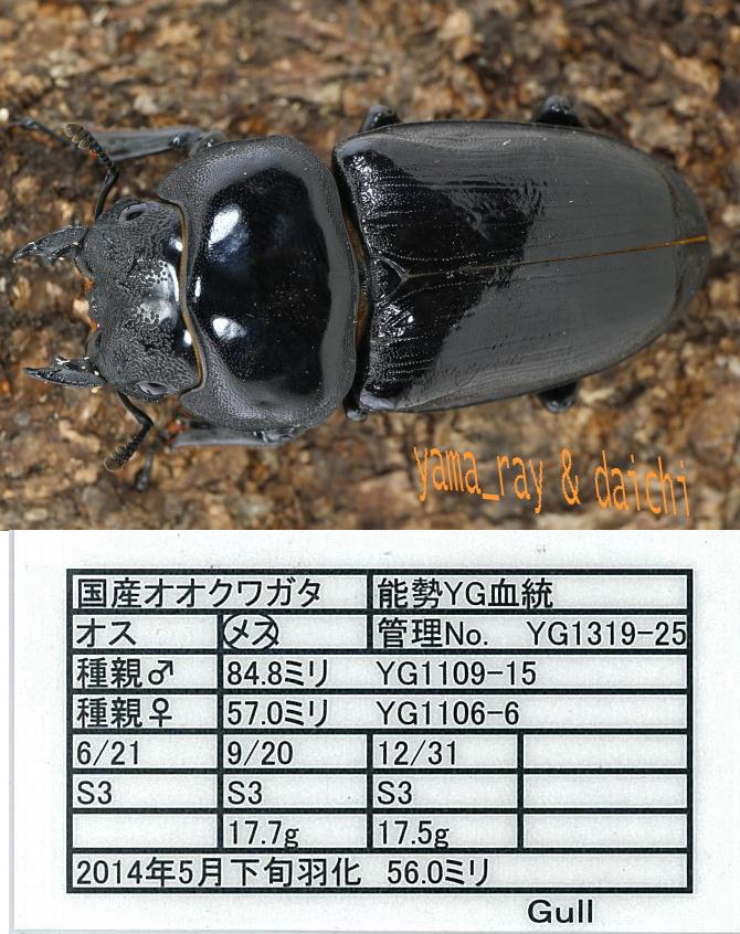 gull-1319-25-56-h-s.jpg