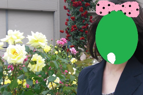 てしーちゃん薔薇