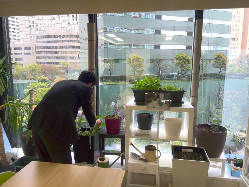 オフィスでおうち畑
