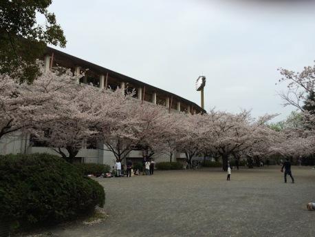 20150404桜をバックに等々力陸上競技場