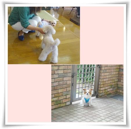 cats2[fZ