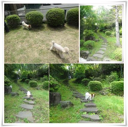 cats_2015052822302675d.jpg