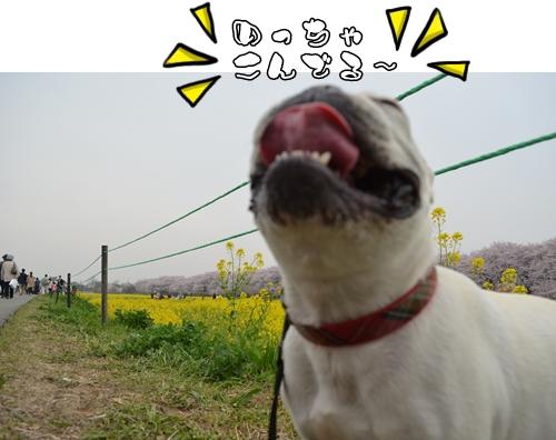 DSC_8019.jpg