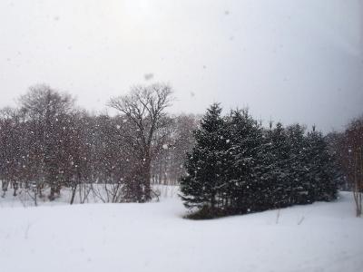 3月終わりの雪 (1) (400x300)