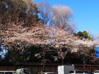 九段下&靖国神社の桜 (400x300)