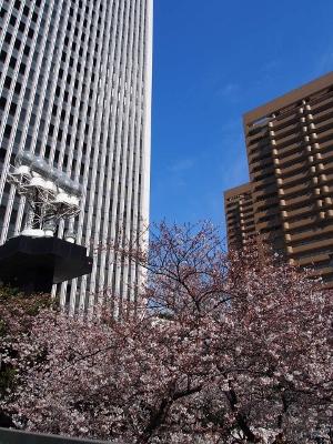 六本木の桜 (300x400)