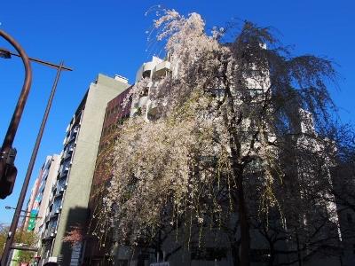 九段下&靖国神社の桜 (2) (400x300)