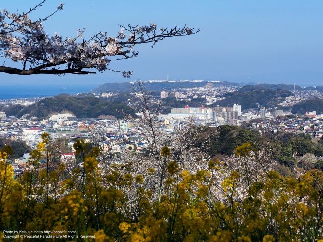 衣笠山公園からの眺め