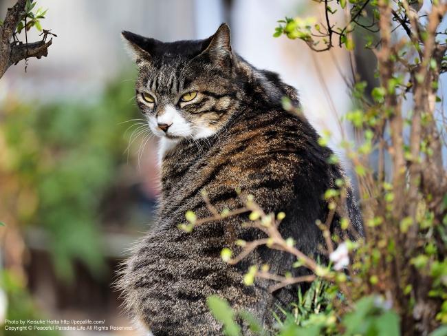 衣笠山公園の猫