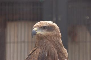 150402_夢見ヶ崎鳥1