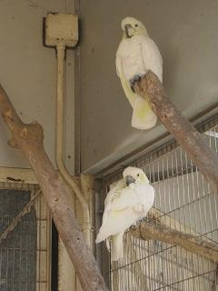 150402_夢見ヶ崎鳥3