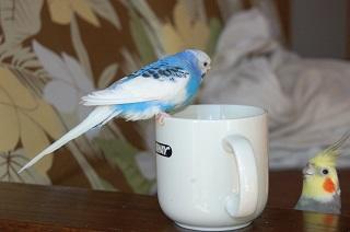 ピーコ・コーヒー好き