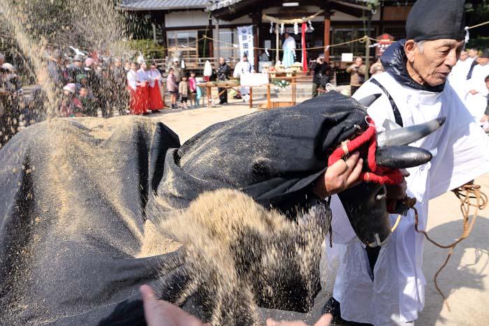 小泉神社 御田植祭2