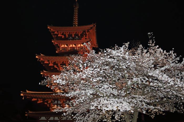 薬師寺 花会式3