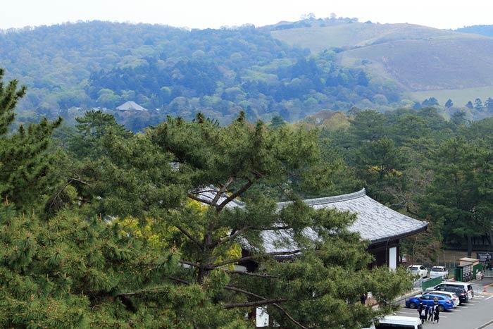 興福寺 中金堂5
