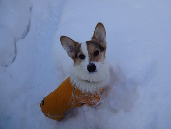 20150110 雪のレジーナDSC06912