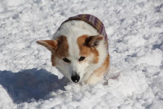20150110 雪のレジーナ0111_xlarge