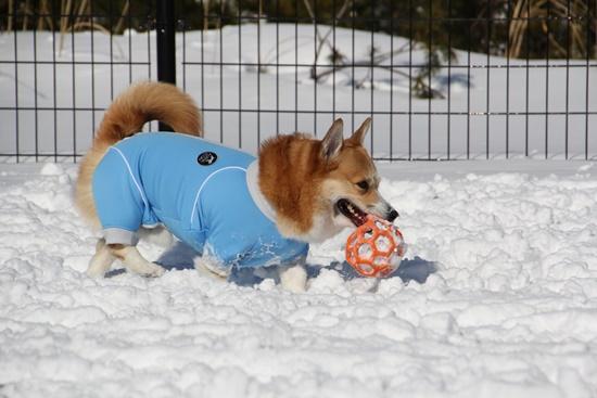 20150110 雪のレジーナ0127_xlarge