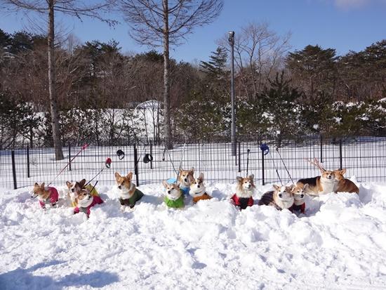 20150110 雪のレジーナDSC06846