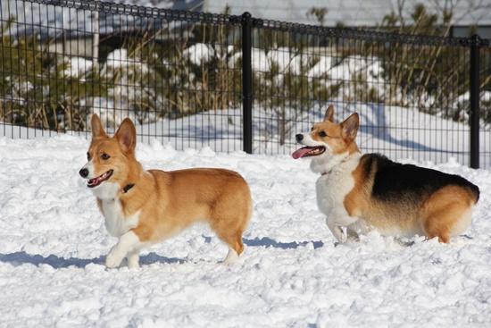 20150110 雪のレジーナ0150_xlarge