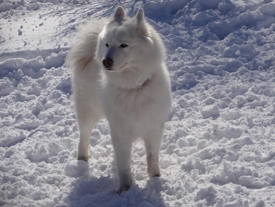20150110 雪のレジーナDSC06864