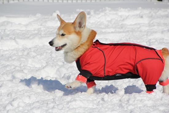 20150110 雪のレジーナ0108_xlarge
