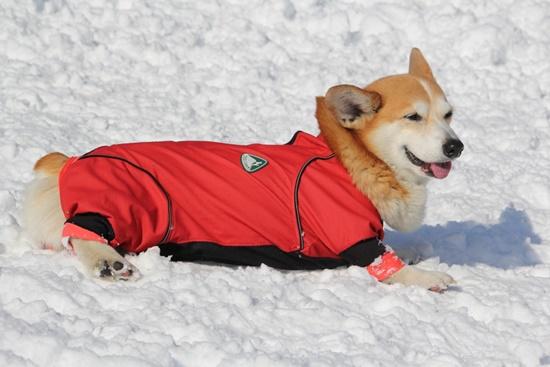 20150110 雪のレジーナ0114_xlarge