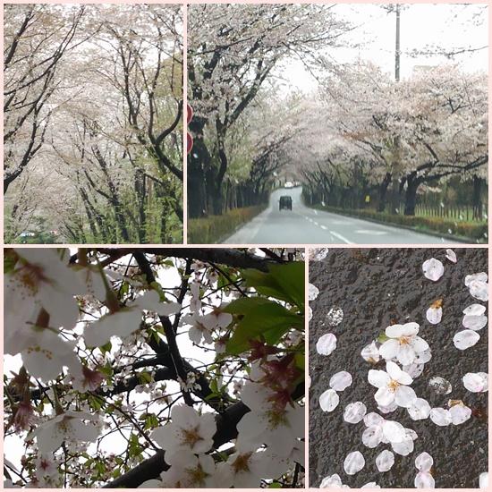 桜のおしまい