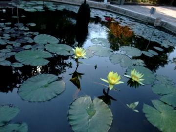 パドヴァ30植物園