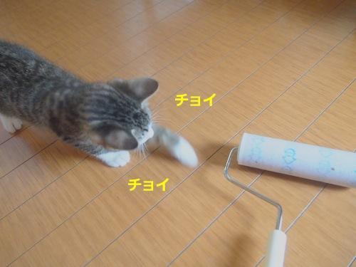 P5298010.jpg