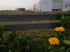 [写真]受付ハウス前の花壇に咲いた2輪のキンセンカ