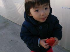 [写真]小さなお子さんが、大粒のやよいひめを両手で持って歩いているところ