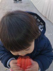 [写真]小さなお子さんが大粒のやよいひめにパクリとかぶりついているところ