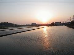 [写真]農園近くの田んぼの水面に映る夕日