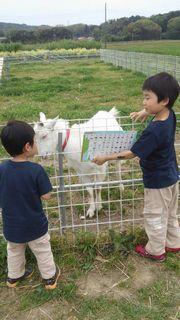 [写真]小さな兄弟がアランにカタカナを教えようとしている様子