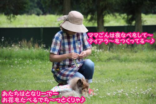 IMG_0302_convert_20150615170957.jpg