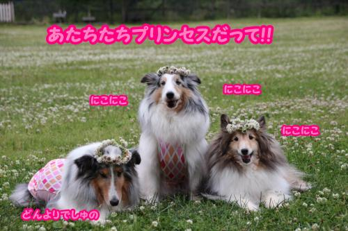 IMG_0386_convert_20150610160034.jpg