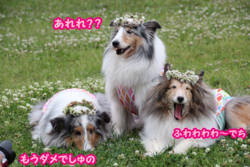 IMG_0409_convert_20150615171212.jpg