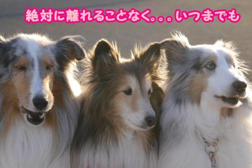P1100054_convert_20150125165016.jpg