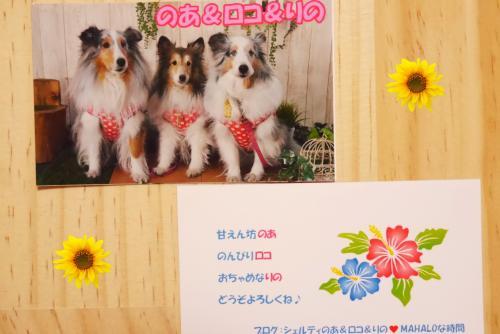 P1110157_convert_20150303170529.jpg